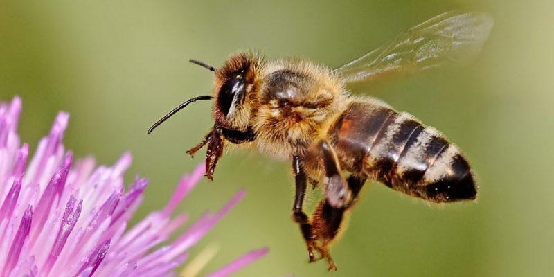 repuestos_fuster_protección_abejas