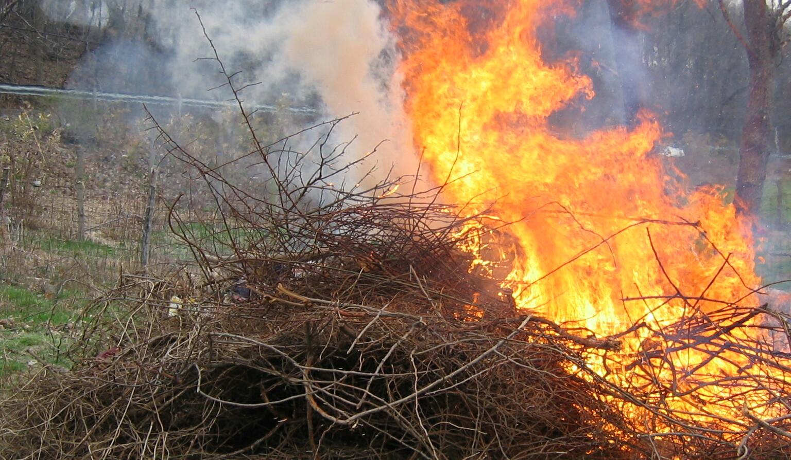 Burning_pile_of_multiflora_rosesssss
